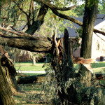 Branch Removal Kettering Ohio
