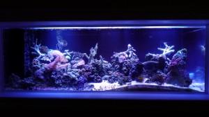 custom aquarium installation dayton