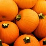 orange pumpkins in kettering ohio
